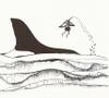 Hummingbirdwhale
